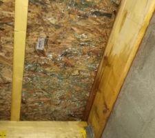 13-12-2017 Charpente humide suite a défaut d'étanchéité, sous toiture revêtue de champignons suite défaut de ventilation.
