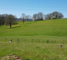 Piquets et clôture