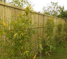 Nouvelle cloture à la place des Thuyas + Bambous non traçants