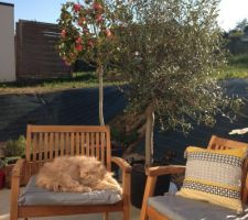 Hermes sous l'olivier