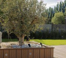 Finition entourage olivier et spots
