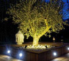 éclairage olivier de nuit