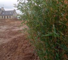 Ce matin nous avons déposer nos bambous en prévision d une plantation en milieu de semaine