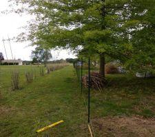 Le grillage : 100 m à poser, c'est beau d'avoir un grand jardin...