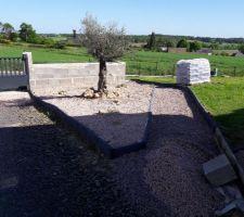 Notre petit olivier avec des graviers tout au tour avant la mise en place de cailloux blanc.