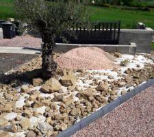 Avant la répartition des graviers autour de l'olivier avec tous les cailloux extraits du jardin...