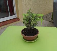 Notre bébé olivier, c'est le troisième
