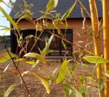 Bambou et maison en bois