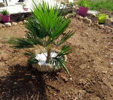 Et voilà mon bébé feuillu de planté, (palmier chanvre) espérons qu'il soit heureux ici et mesure 5 m :)