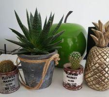 Encore des petites plantes...