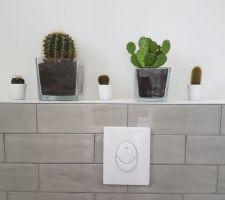 Invasion de cactus... gare a vos fesses!