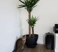 Mimi veille au grain sur ses nouvelles plantations