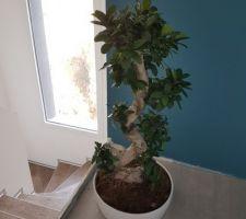 Ma nouvelle passion pour les plantes