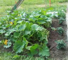 Début juillet : ça a bien poussé au jardin !