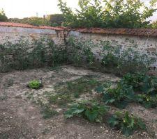 Notre jardin tout plein de tomates !
