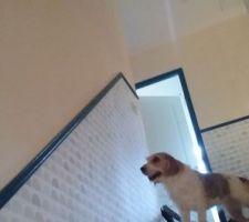 Même la chienne est ébahie par le joli luminaire installé et opérationnel dans l'escalier