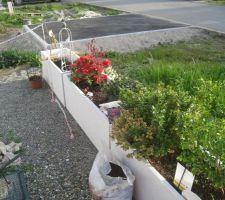 Floraison cloture devant maison