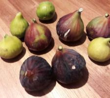 2 variétés de figues: <Blanche d?Argenteuil et grise de Tarascon   un régal
