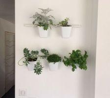Pose de suspensions IKEA reçevant des plantes