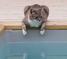 C'est cool quand même une piscine dixit