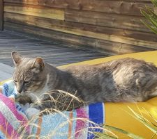 Le chat en mode bronzette sur le coussin de la piscine.