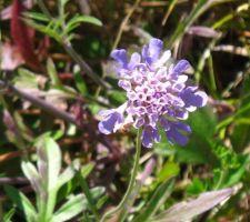 Une fleur sauvage dans la