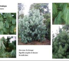 Recherche type d?arbre de gros sujet à planter