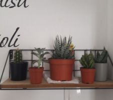 Mes succulentes et cactus
