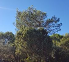 Un petit bout de ciel bleu