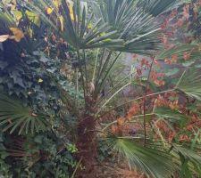 Mon palmier que je veux  conserver.