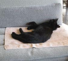 Noa apprécie le nouveau canapé