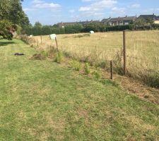 Désherbage en cours et dépose ancienne clôture
