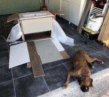 Les nuances des couleurs du meuble vasques des carreaux mur et sol sont parfaites avec le chien