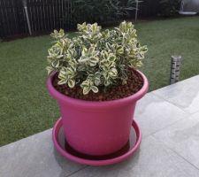 Nouvelle plante...nouveau bac lol