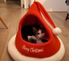 Mon chatpin de Noël