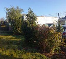 Arbres et arbustes à supprimer car la maison sera en limite de terrain