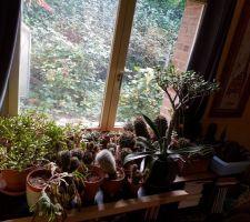 Le reste des plantes que je devrai récupérer après l'hiver.