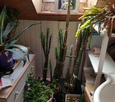 Le reste des plantes que je devrai récupérer après l'hiver. Le plus grand cactus fait environ 1m60 de haut.