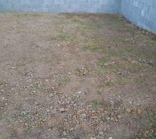 La pelouse que j ai semé il y a 10 jours sort déjà.