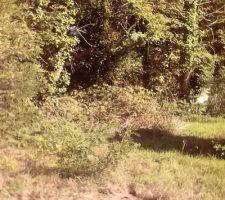 Coté forêt à débroussailler (encore !)