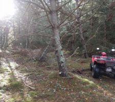 Nettoyage de la forêt - Avant