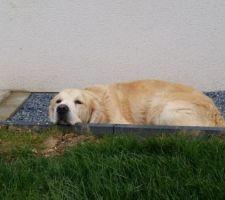 Le chien a trouvé une utilité à nos bordures béton