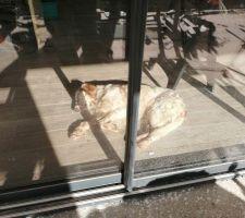 Petite sieste au chaud