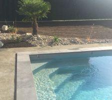 Palmier à côté de la piscine