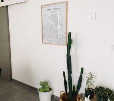 Nouvelle affiche et croissance du cactus