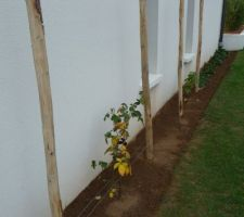 Plantation d'un murier et d'un framboisier, avec les fraisiers dans le prolongement ça va devenir le coin des enfants !!!!