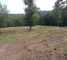 Partie du terrain ou se trouvera la Maison. Le chêne a gauche nous servira l été pour manger a l ombre.