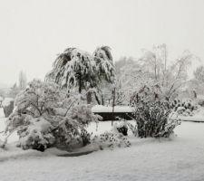Neige du 1er février : l'olivier est devenu pleureur !