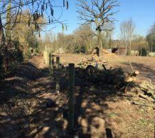 Haies mitoyenne plantées, clôture en cours