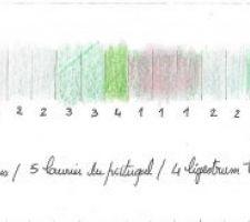 Plan couleur du projet de la haie